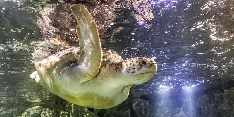 Turtle at Sea Life
