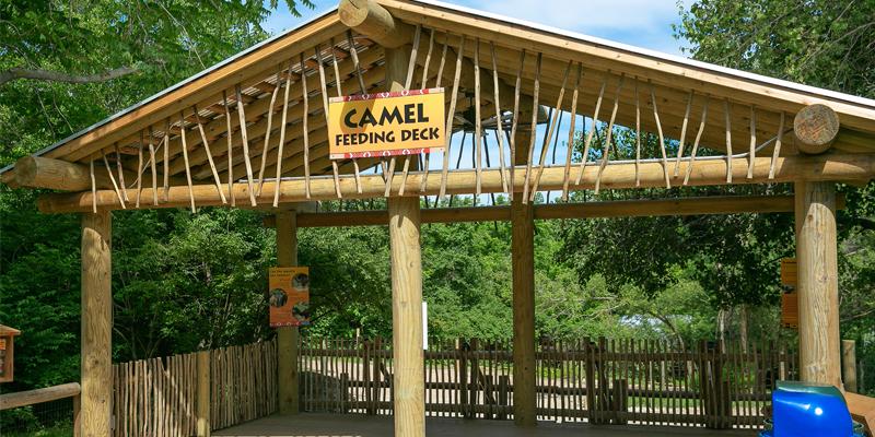 Camel Feeding Station